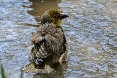 Et20226-Nad Lake Langano-ptak Wikłacz