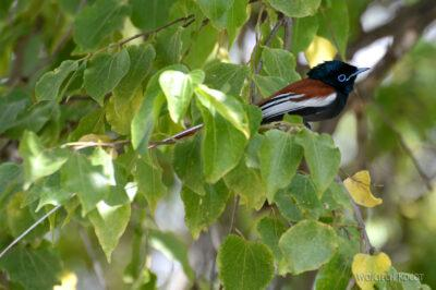 Et20233-Nad Lake Langano-ptak turakowaty