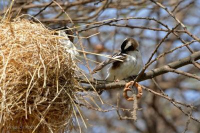 Et20235-Nad Lake Langano-ptak Wikłacz