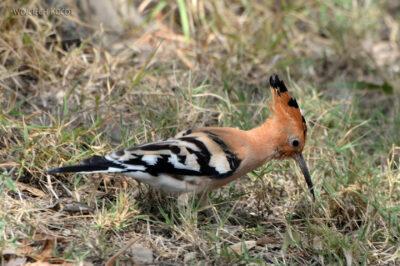 Et20239-Nad Lake Langano-ptak Dudek