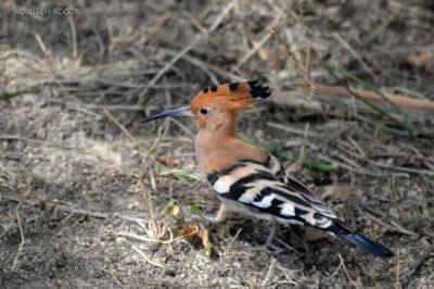 Et20240-Nad Lake Langano-ptak Dudek