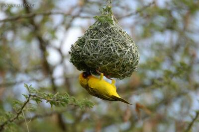 Et20256-Nad Lake Langano-ptak Wikłacz