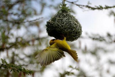 Et20259-Nad Lake Langano-ptak Wikłacz