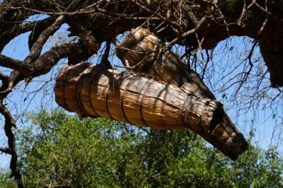 Et25017-Ule na drzewach