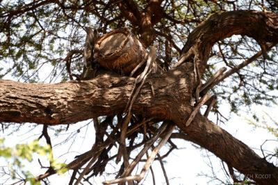 Et23215-Wioska plemioenia Tsmai-ule na drzewach