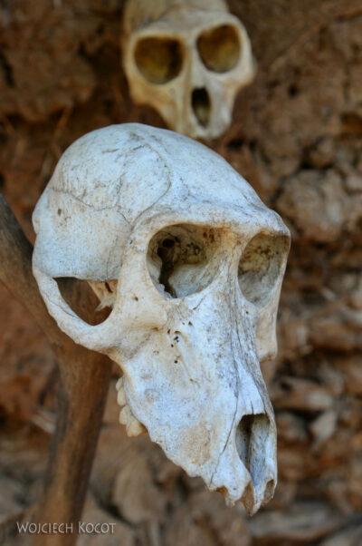 Et24222-W wiosce Gamole plemienia Konso