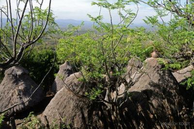 Et24249-W wiosce Gamole plemienia Konso-domy