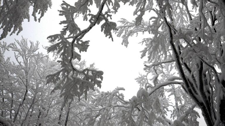 1-Śnieżnica02