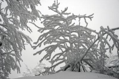 1-Śnieżnica04
