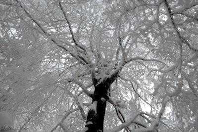 1-Śnieżnica07