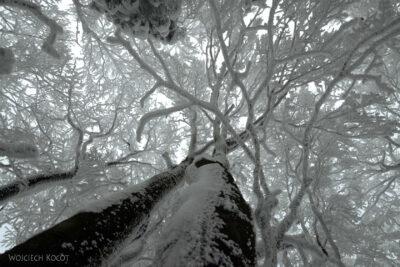 1-Śnieżnica09