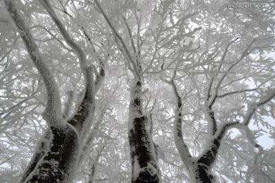 1-Śnieżnica11